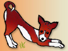 Colorado Basenji Rescue Official Pup