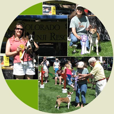 Colorado Basenji Rescue Booth at Wellington Show